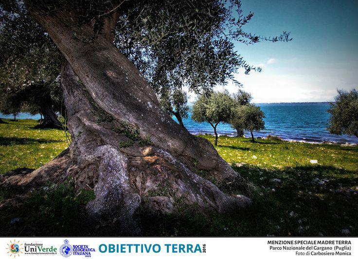 carbosiero monica 8083 PN Parco Nazionale del Gargano MENZIONE MADRE TERRA
