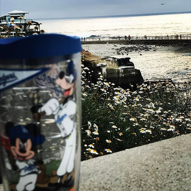 Mickey found the daisies #spring #cali #slaythegram #slay #views #mickey #goofy #disney #sandiego #dodgers #view #lajollacove #lajolla #iphone #spring #ocean #pacific #seals #nature #beauty #beautiful #adventureisoutthere #pictureoftheday #lajollalocals #sandiegoconnection #sdlocals - posted by Rudy Valdez II  https://www.instagram.com/rud3dude19. See more post on La Jolla at http://LaJollaLocals.com