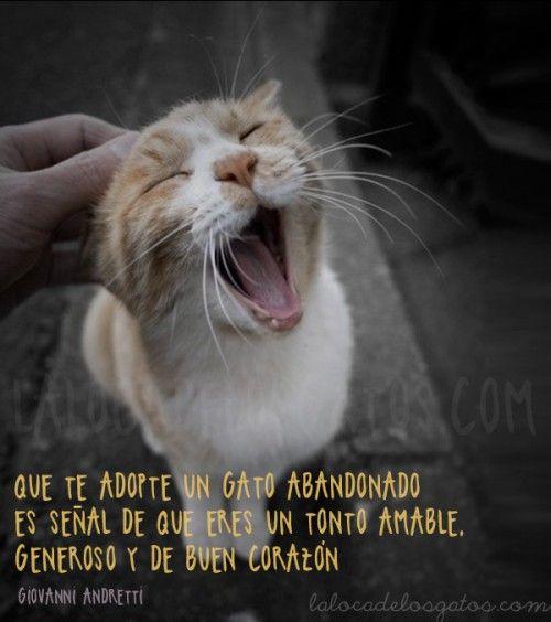 #Cats #CatFacts                                                                                                                                                                                 Más                                                                                                                                                                                 Más