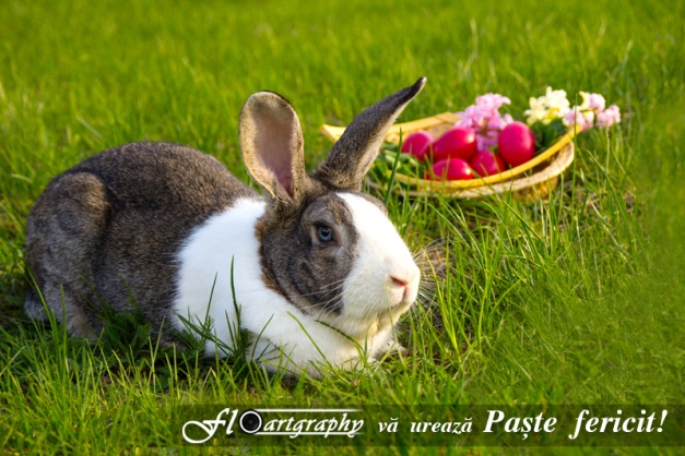 Paste fericit - by Floartgraphy