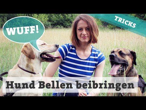 Bellen auf Kommando • Hund Gib laut beibringen • Hundetricks - YouTube