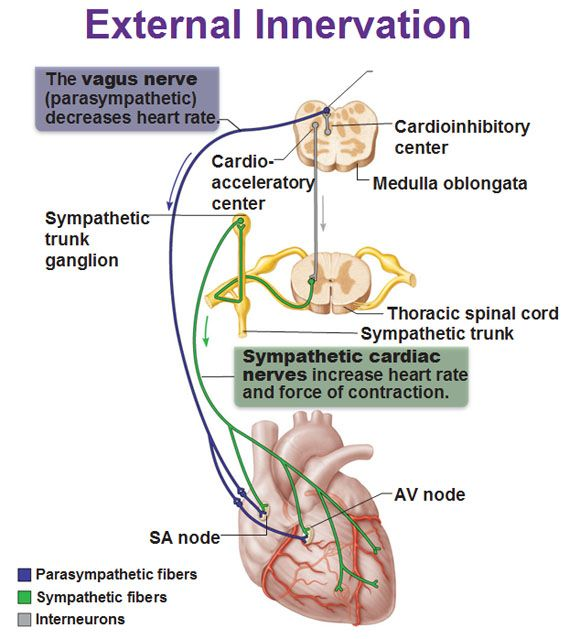 the heart observation in the medical center and the cardiovascular system in its function Diagnosing heart disease  signals to assess electrical function 2 pacing the heart to bring on certain abnormal rhythms for observation under controlled.