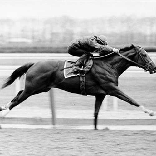 Secretariat's morning workout. Famous photo, often used to determine just how impressive his stride length was.