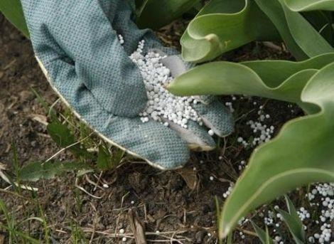 Азот для растений. Как узнать и вылечить дефицит азота?  | Дачники