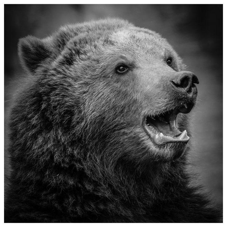 Black bear. by ~DrDrum666 on deviantART