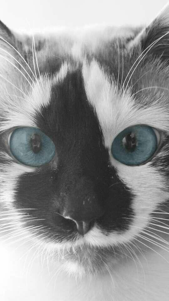 Pinterest Julia Rozano #gatitos