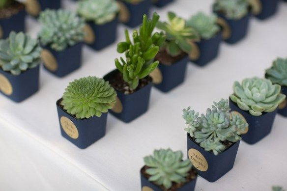 Succulent wedding favour ideas. These are too cute! And last a long time!