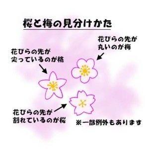 この時期混乱しちゃう、梅と桜と桃の花の見分け方 - NAVER まとめ