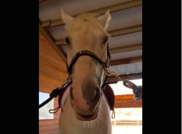 What would your horse have to say about dreaded dressage if it could talk? http://eventingconnect.today/2016/09/01/this-horse-is-brutally-honest-about-his-feelings-towards-dressage-video-break/