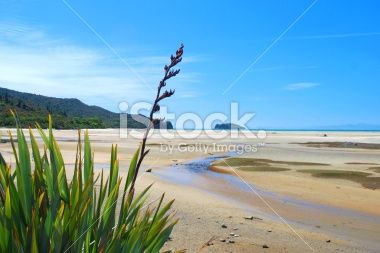 New Zealand Flax Flower with distant Seascape Royalty Free Stock Photo