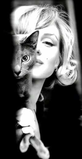 He who understand a cat is halfway to understand women! #cat #women #behaviouralscience #character