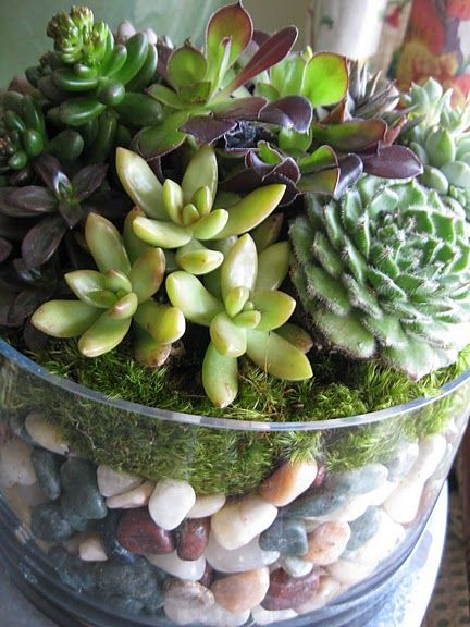 Trifle bowl used once in a blue moon. New use - succulent terrarium.