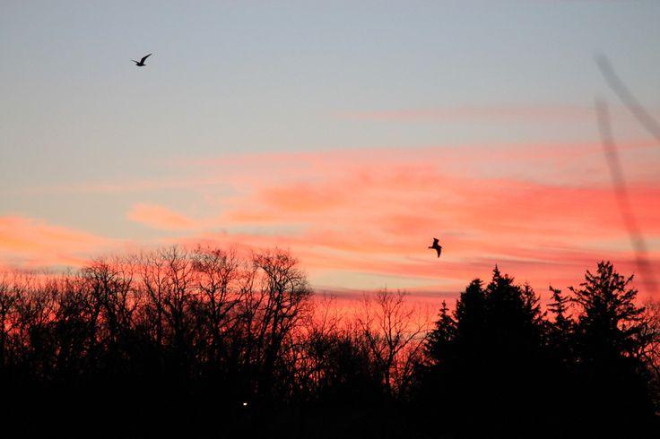 Gorgeous morning sky in Niagara on the Lake