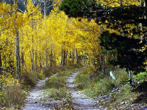 Are you looking for Colorado Mountain land for sale at a good price? Or are you looking for Colorado Hunting land reduced in price? Landindemand.com