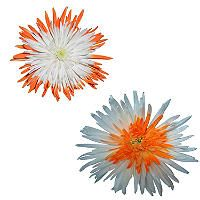 Innie/Outtie Disbuds - Orange and White - 60 Stems - Sam's Club