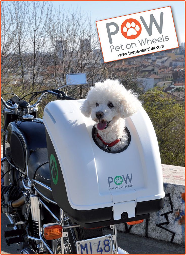The Paws Mahal - POW Pet On Wheels Scooter, Motorcycle, Bicycle