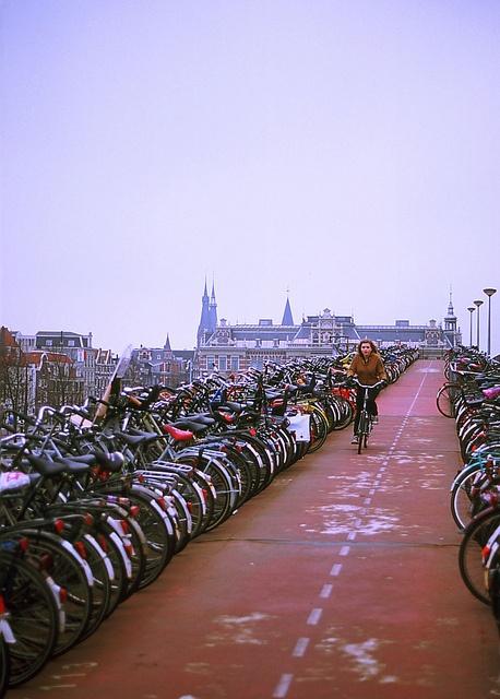 Bike Lane   Amsterdam