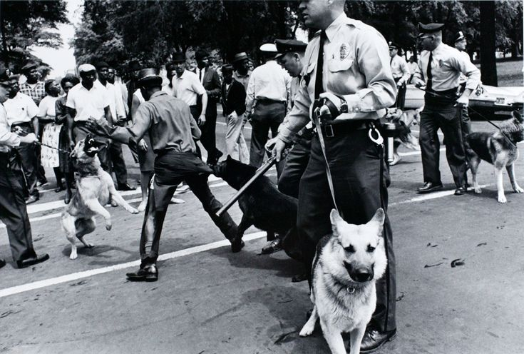 Charles Moore, Birmingham, Alabama, policemen use police dogs during civil rights demonstrations, May 1963