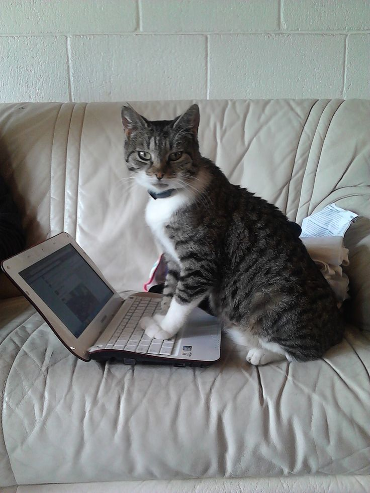 Busted our cat Aurora updating her status....