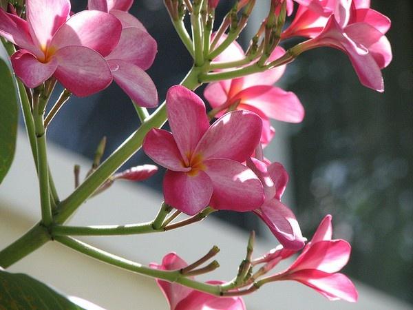 . pink-love