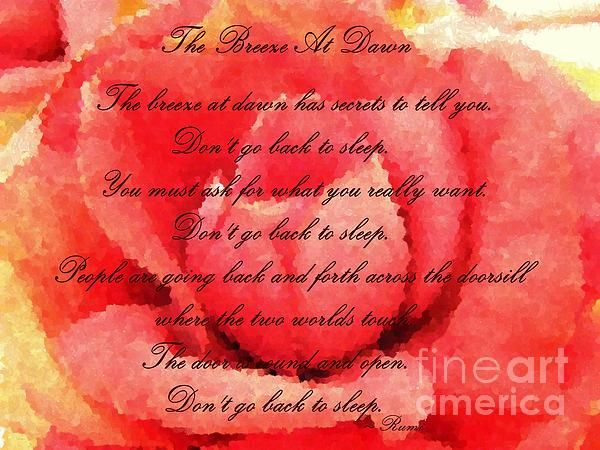 The breeze at dawn Rumi quote rose