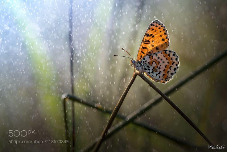 Rain comes (Roberto Aldrovandi / Reggio Emilia / Italia) #nikon D800E #macro #photo #insect #nature