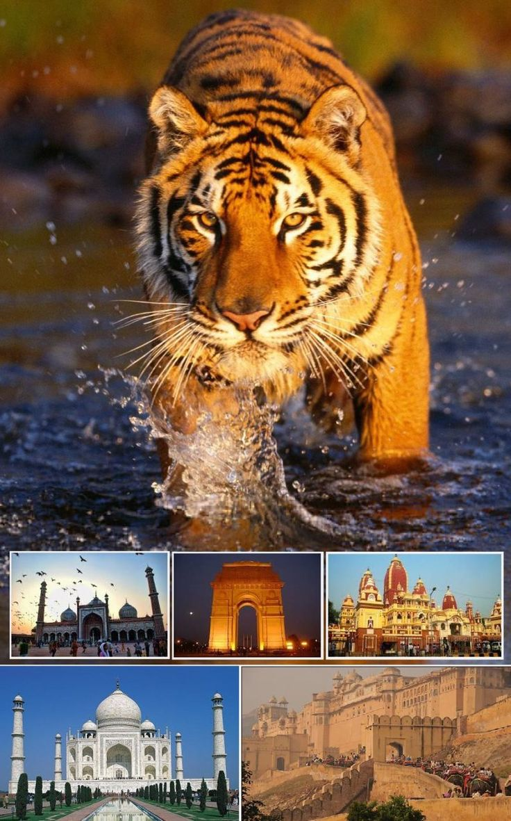 Golden Triangle Tour 9n/10d - Tours From Delhi - Custom made Private Guided Tours in India - http://toursfromdelhi.com/golden-triangle-tour-package-9n10d-delhi-agra-bharatpur-ranthambore-jaipur-mandawa/