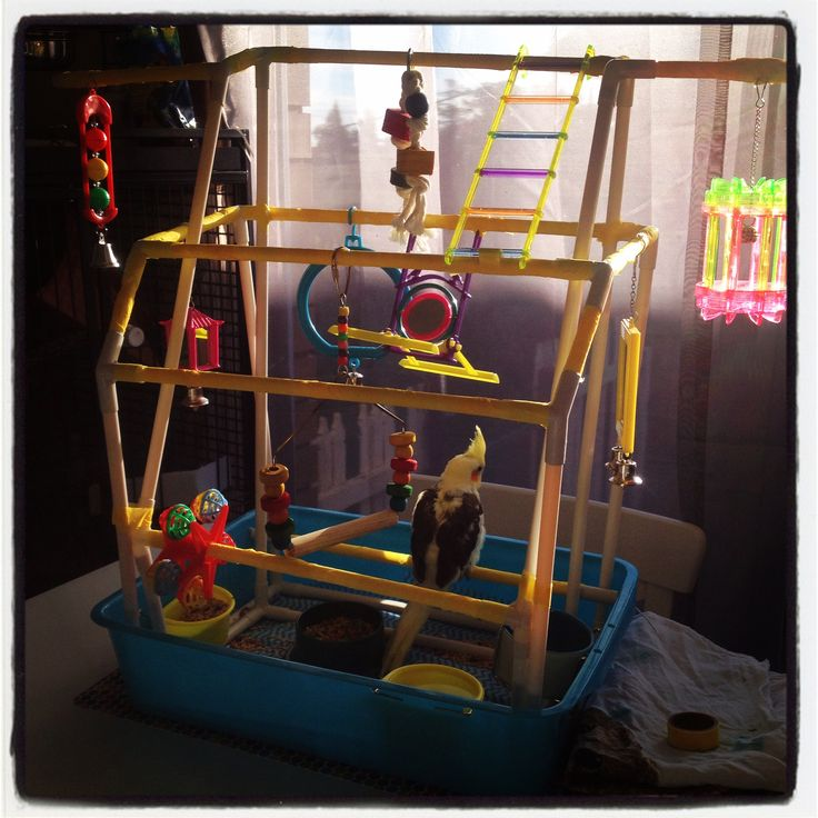 DIY Bird play gym: use small rubbermaid container to hold ...