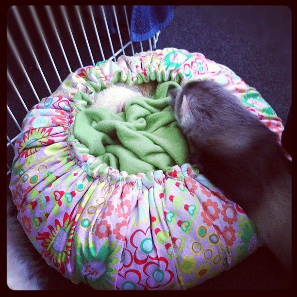 Gosh this looks comfy!!! Ferrets!