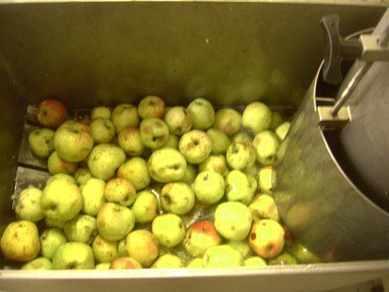 La cuve pour le broyage des pommes Prieuredorsan.com