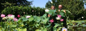 Andar per vivai: Padova e dintorni | Italian Botanical Trips