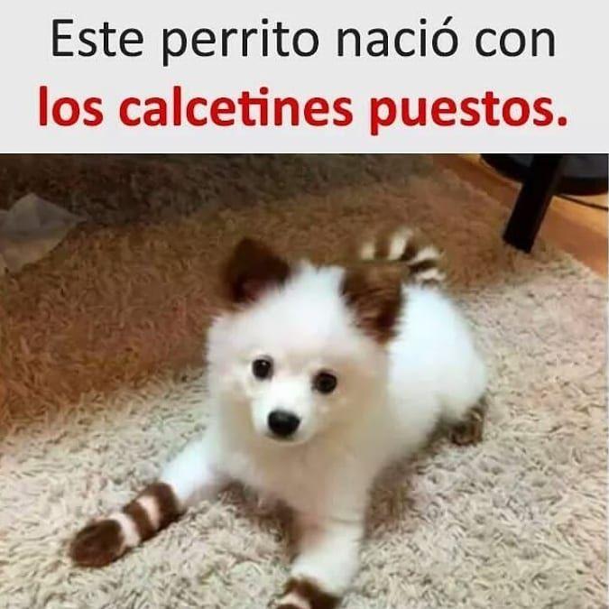 Pin De Alicia Santillana En Divertido Humor De Perros Chistes De Perros Videos De Animales Tiernos