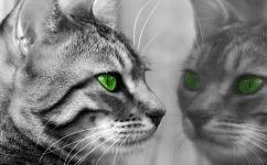 fototapet pisica