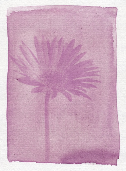 Br¡ttography | Anthotype | pink