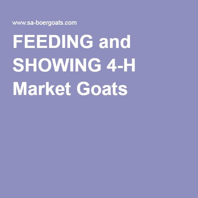 FEEDING and SHOWING 4-H Market Goats