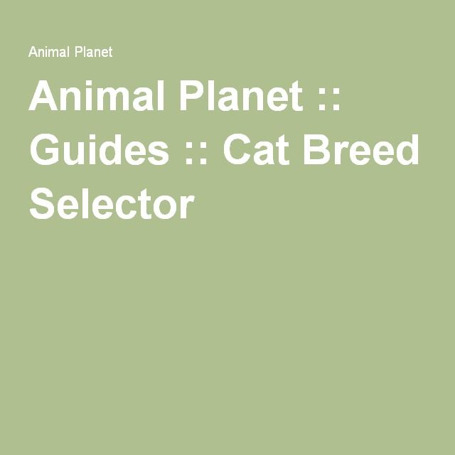 Animal Planet :: Guides :: Cat Breed Selector