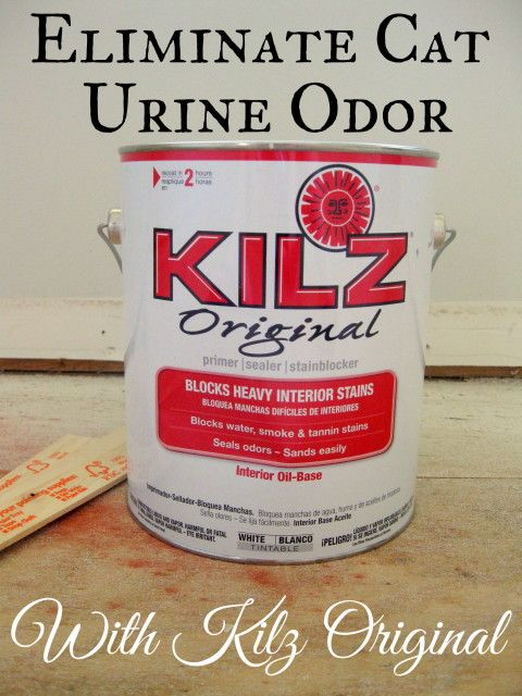 Eliminating Cat Urine Odor | A Kilz Original Review - Mrs. Fancee
