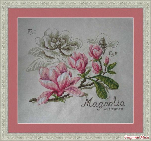 Магнолия из ботанической серии