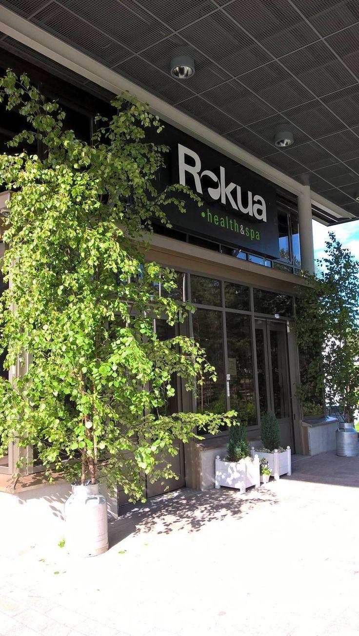 Juhannuskoivut koristavat hotellin sisäänkäytiä juhannuspäivänä. Rokua Health & Spa Hotel, Finland.