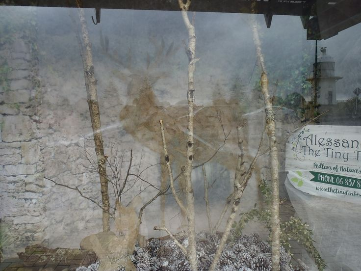 Shadows in the mist - this display was made by piecing together a stag and fawn from skeleton leaves found on the floor of our little enchanted forest.