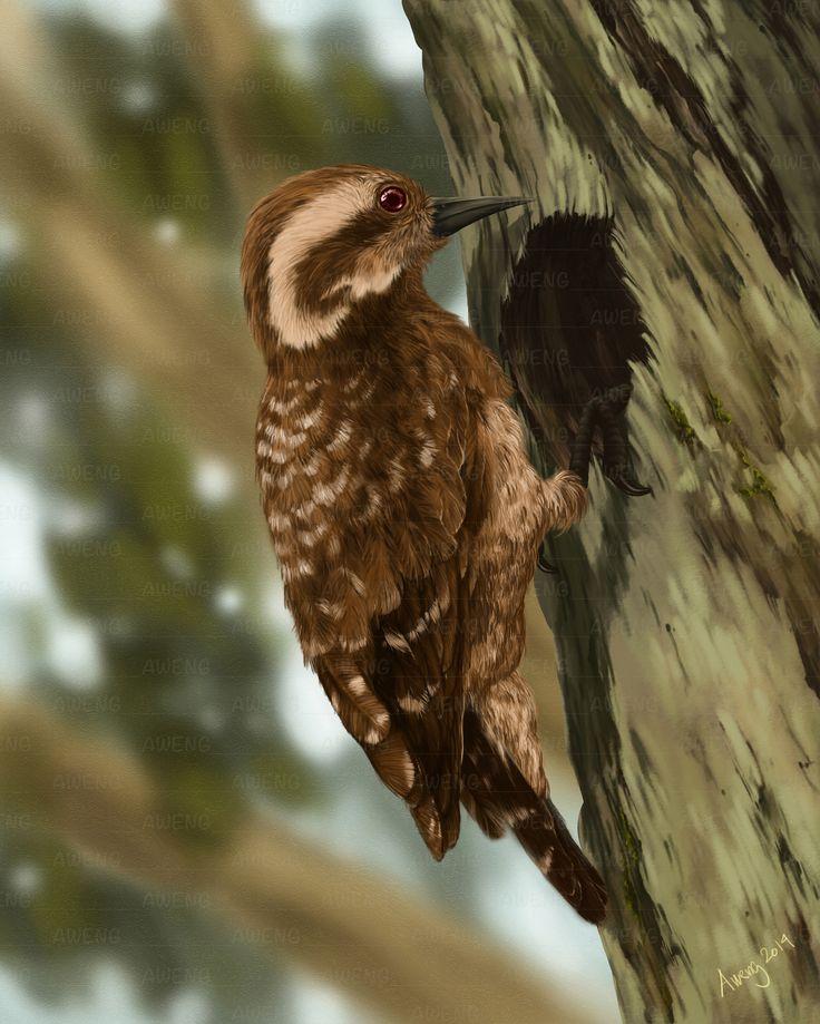 Sunda Pygmy Woodpecker My art page: https://www.facebook.com/Aweng8892 http://fineartamerica.com/profiles/irwan-iskak.html http://isyamu.deviantart.com/