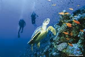 Scuba and snorkeling tours in Puerto Vallarta.  http://www.fandctravel.com/los-angeles-cruise/