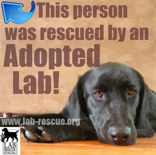 Were you rescued by a Lab Rescue of the LRCP lab?