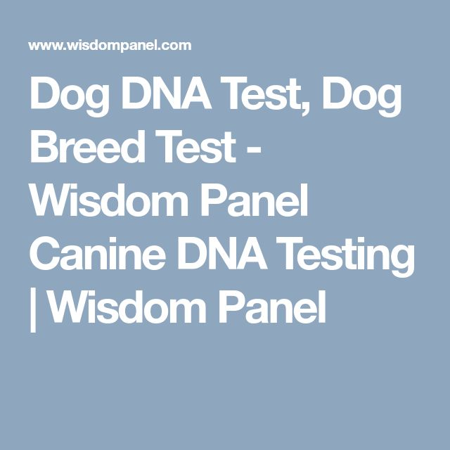 Dog DNA Test, Dog Breed Test - Wisdom Panel Canine DNA Testing | Wisdom Panel