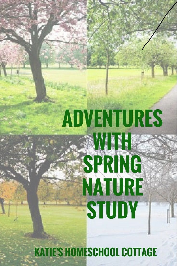 Study science through nature study this spring with nature hike suggestions and a free nature hike supply checklist.  https://katieshomeschoolcottage.com/2017/03/13/adventures-with-spring-nature-study/