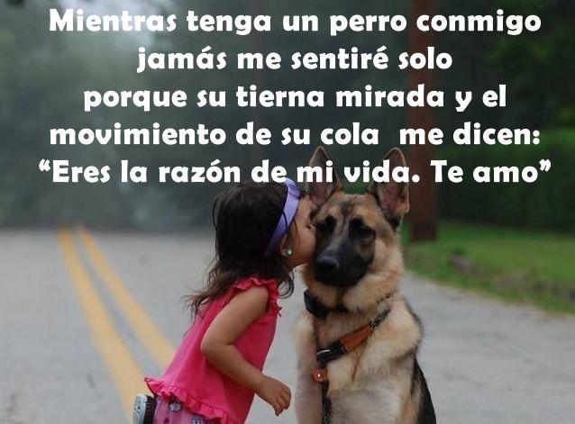 Pensamientos, perro, perros, motivación, reflexión, frases, spanish quotes, razón de vida, te amo