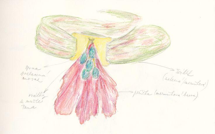 http://iris-jewellery.com/; návrh/design: Iris-Jewellery materiál/makings: peří/plume; mosaz/brass; mušle Paua/Paua shells; šátek/scarf.
