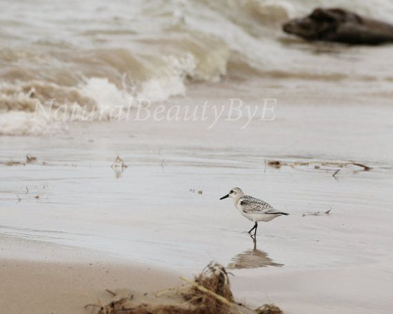 Check out this item in my Etsy shop https://www.etsy.com/ca/listing/476570269/shore-bird-on-beach-lake-huron-shore