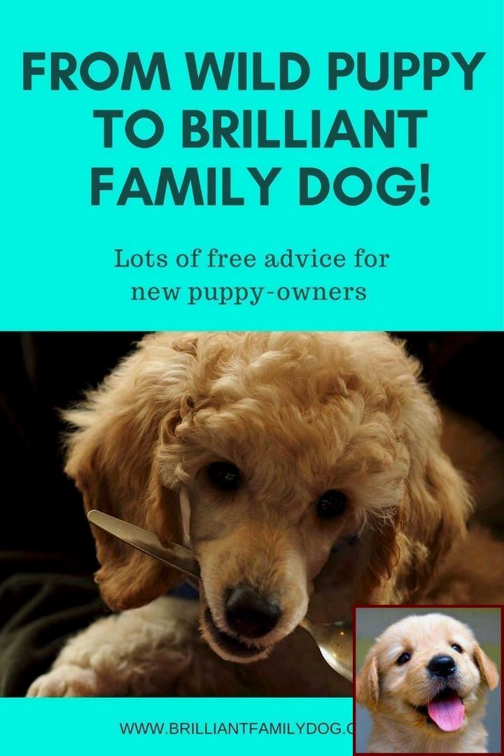 Potty Training Puppy No Crate And Dog Training Classes Rspca