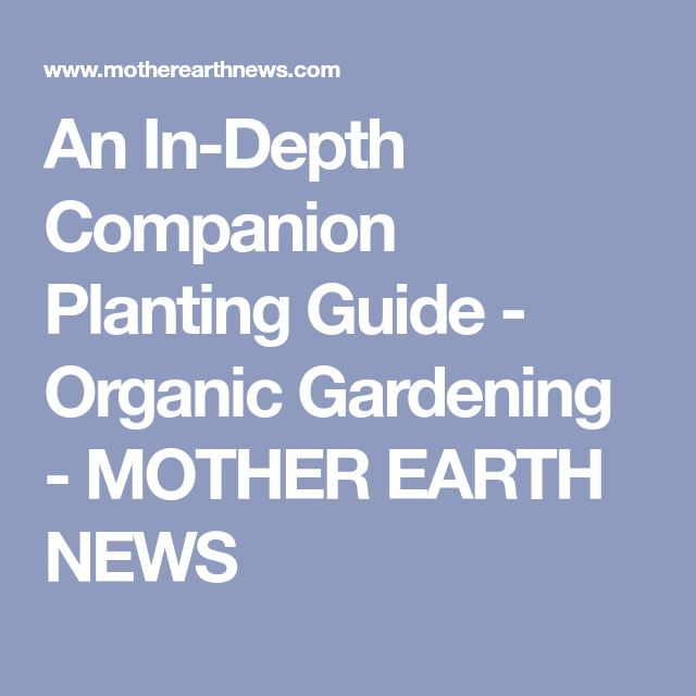 Best  Companion Planting Guide Ideas On   Companion